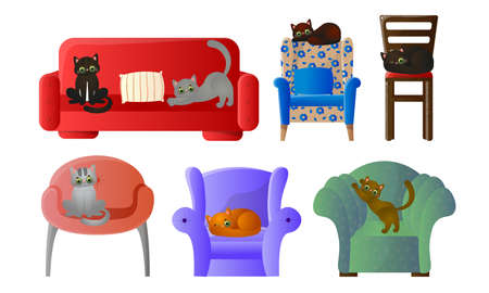 Cats sleeping and sharpen claws on armchairs and coaches at home