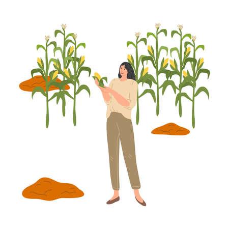 Woman farmer holding ripe corn during harvesting in autumn