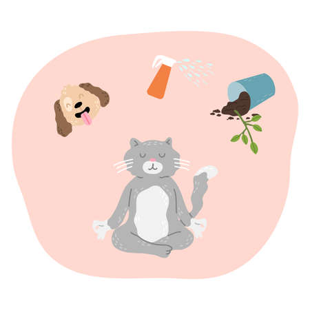 Cat trying to concentrate and not to think about dog, spray and flower in pot and meditating