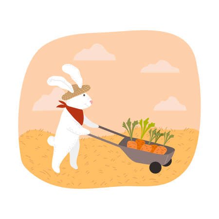 White rabbit farmer carrying picked carrots in wheelbarrow during harvesting