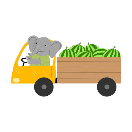 Smiling grey elephant riding truck and carrying watermelons 写真素材