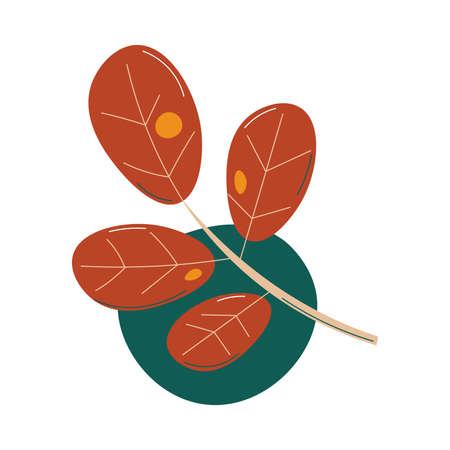 Traditional symbol of autumn fallen brown oak leaf vector illustration