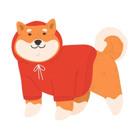Japanese akita dog in red knitted sweater standing and feeling happy