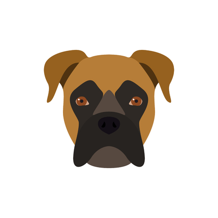Boxer is a dog. Vector image of a dog's head. Vector Illustration