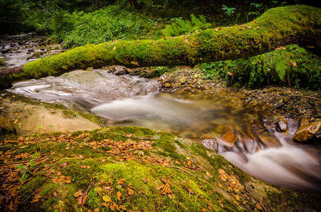 A natural bridge full of moss formed by the trunk of a tree fallen over a creek