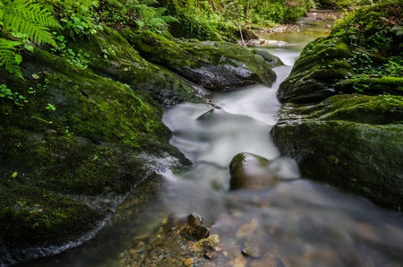 Long exposure of a small mountain creek that winds through the mossy cliffs and ferns