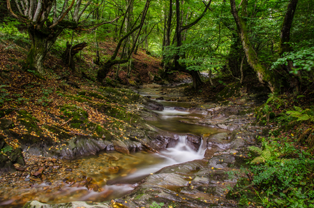 A small creek that runs through a wide valley full of fallen leaves, ferns and contorted beautiful trees