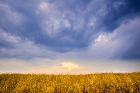The sun is about to set over a golden field, symmetrically opposed to a wonderful blue sky full of clouds