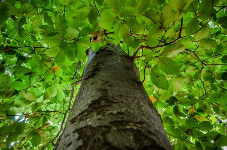 A background full of green leaves with the tree trunk blurred in the foreground