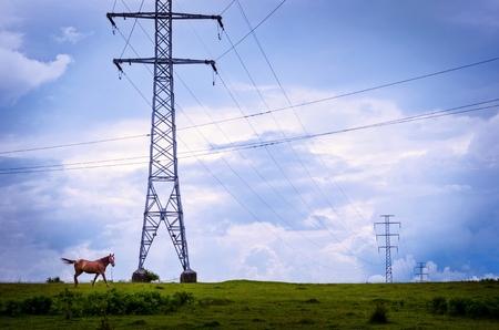 A horse strolling in a midsummer promenade near the electricity pillars