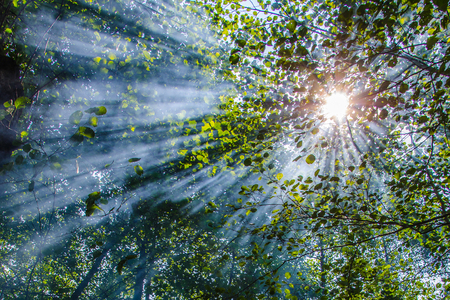 Wonderful sun rays penetrating among the branches and leaves of the broadleaf trees in deciduous forest in a hot summer day