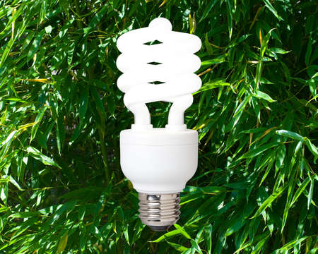 a compact fluorescent light bulb against a background of bamboo