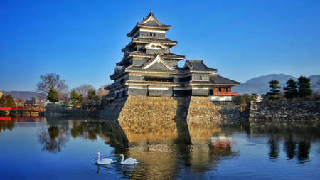 matsumoto: Swan couple swimming together in front of Matsumoto Castle