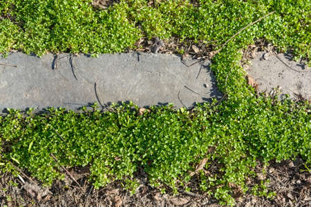 Leaves of grass, ground and curbstone background Stock Photo