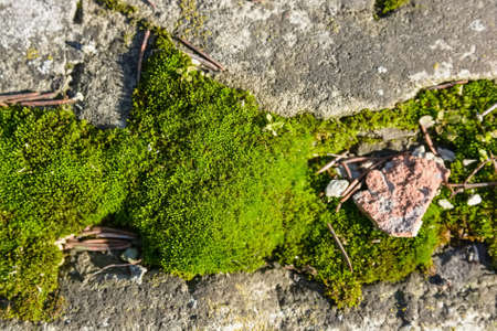 Close up moss on the stone