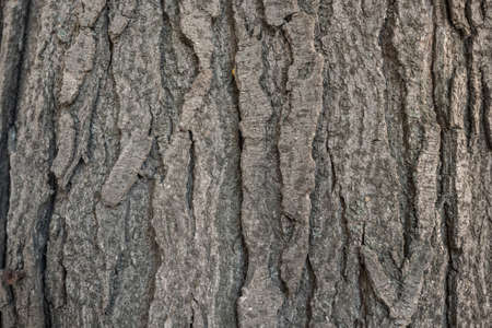 Old bark macro Stock Photo - 76556627