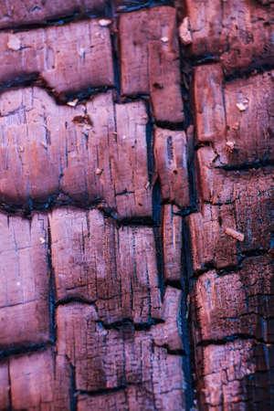 outdoor fireplace: Closeup burnt firebrand