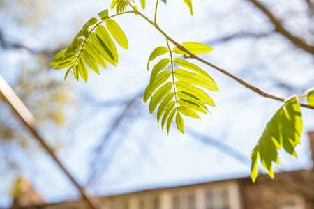 tilia cordata: Green leaves against sky on sunny day