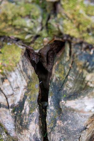 Sluit omhoog hol in oude boom