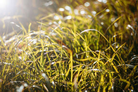 Juicy grass on sunny day Stock Photo