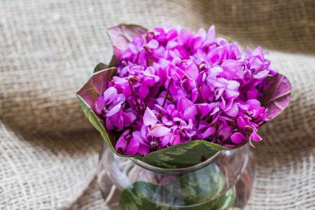 Bouquet of violet flowers or Viola Odorata in bowl