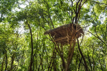 primeval forest: House of vedda people Stock Photo