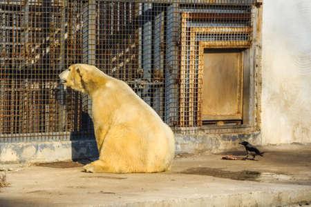 aviary: White polar bear in zoo Stock Photo