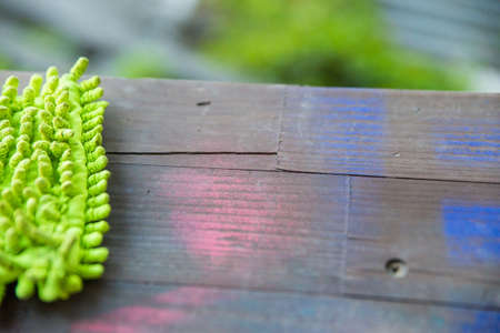 Close up detail of green mop on wooden background Stock Photo