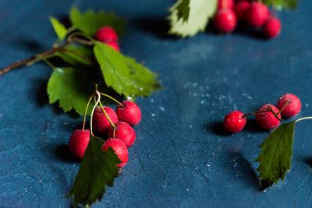 Studio shot hawthorn berries on blue background