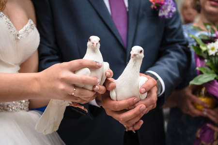 Close up two white pigeons in hands of bride and groom. Wedding traditio Stock Photo