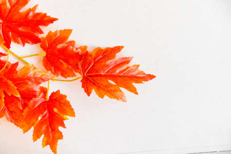 Artificial red maple leaves white background