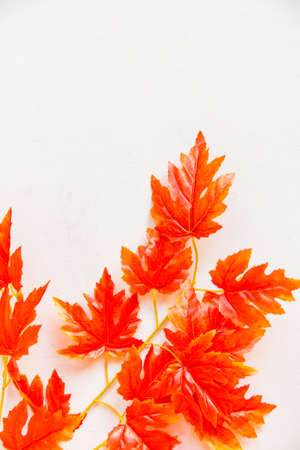 Close up branch of artificial maple tree fall concept