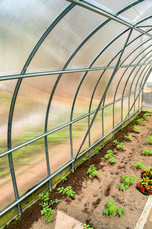 View inside of plastic garden greenhouse outdoors with plants inside