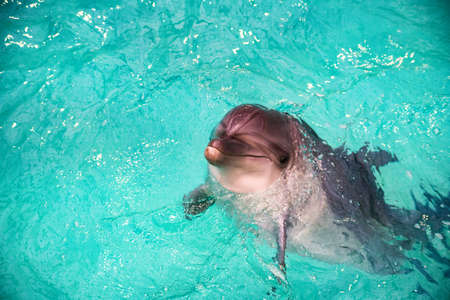 Cute dolphin in pool in dolphinarium Stock Photo