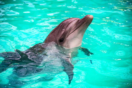 Cute dolphins in pool in dolphinarium Stock Photo