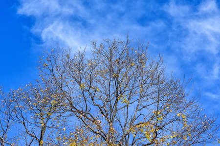 Crowns of bare trees in autumn on sunny day