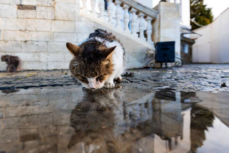 Close view of homeless cat drinking water from a puddle after the rain.