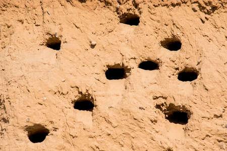 Sand Martins or Riparia riparia in nesting holes Фото со стока