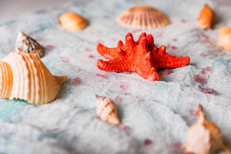 Seashells and starfish on white cloth background