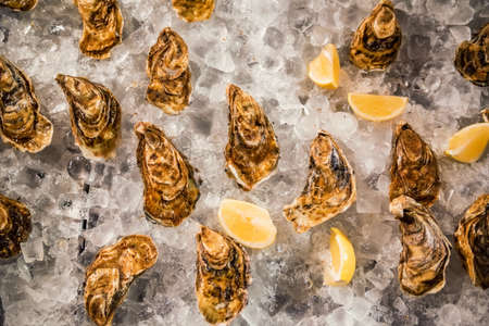 Fresh ocean oysters with slices of lemon on ice