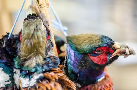 cadaver: Pheasants for dinner