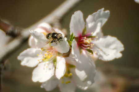 enviroment: Blossom and bee