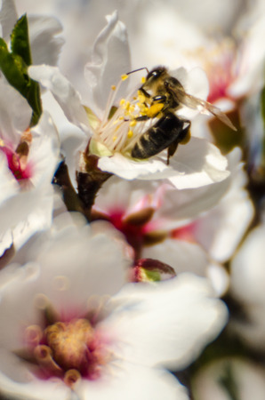 oily: Blossom and bee
