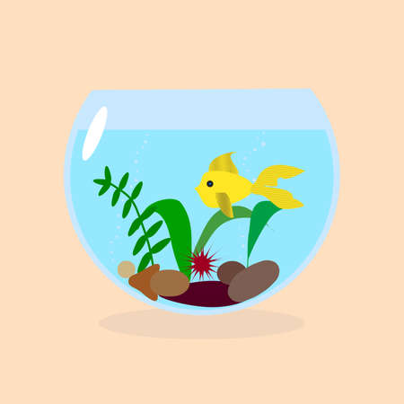 goldenfish: Golden fish in a small aquarium with plants and stones Illustration