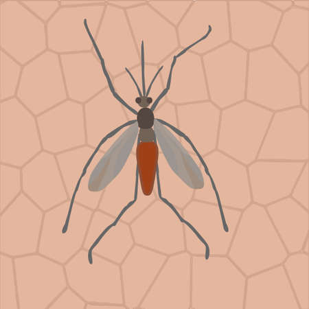 infectious: A mosquito  sits on human skin- illustration of infectious diseases transmission Illustration
