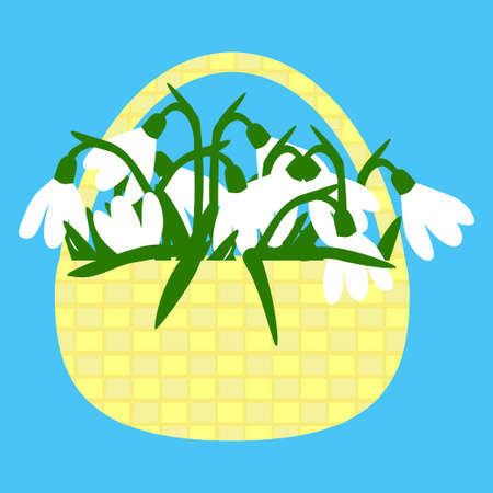 springtime: Basket full of snowdrop flowers with white buds and green leaves - vector illustration fod season greeting card, springtime ads, decoration on romantic issues Illustration