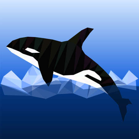 killer whale: Grampus killer whale in low poly style. Vector polygonal illustration of killer whale on ice water background