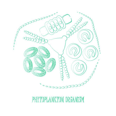peat: Phytoplankton. Vector illustration with small organism of phytoplankton on environmental biologicall nature wildlife theme.
