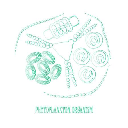 protozoan: Phytoplankton. Vector illustration with small organism of phytoplankton on environmental biologicall nature wildlife theme.