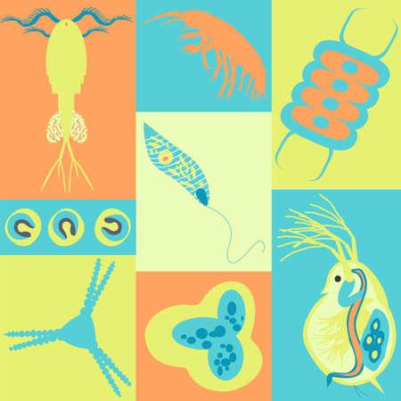 plankton: Plancton. Ilustraci�n del vector con peque�o organismo de fitoplancton y zooplancton en biologigal medioambiental tema de la naturaleza de la fauna. Vectores